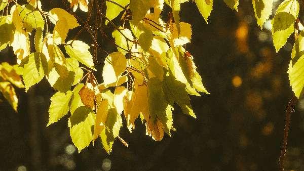 φθινόπωρο και διακοπές στην Σπάρτη. Ταΰγετος, Πάρνωνας Μυστράς
